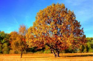 image de l'automne